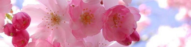 cropped-blomster1.jpg